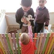 Аренда детской игровой комнаты АРБУЗ на праздник+контактный зоопарк