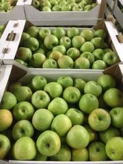 Яблоки оптом от производителя Краснодарский край